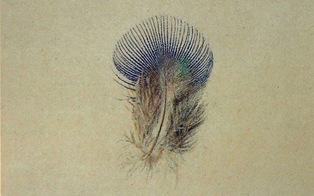 644px-Study_of_a_Peacocks_Breast_Feather1
